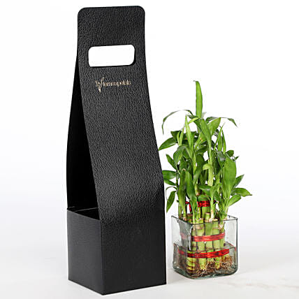 2 Layer Bamboo Plant With FNP Sleeve: Good Luck Plants for Anniversary