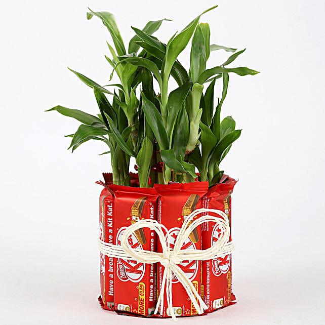 2 Layer Lucky Bamboo Kit Kat Chocolates: Gift Combos