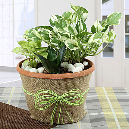 Air Purifying Dish Garden: Tropical Plant Gifts