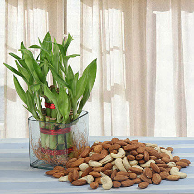 Alluring Gift: Rare Plants