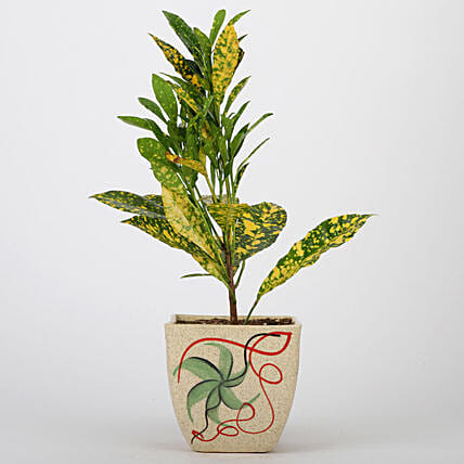 Baby Croton Plant In Printed Ceramic Pot: Exotic Plant Gifts