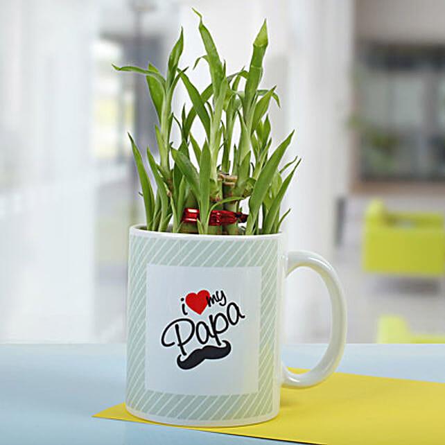 Bamboo In A Mug: Lucky Bamboo Plants