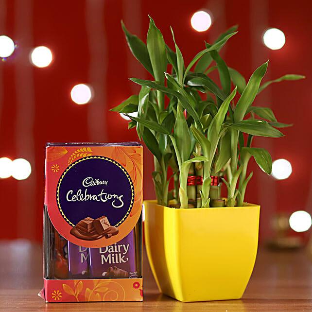 Bamboo Plant & Cadbury Celebrations Box: