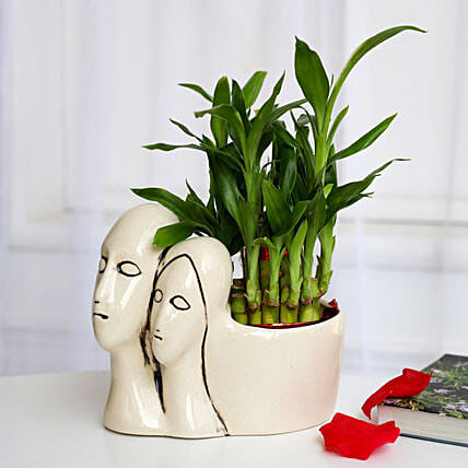 Lucky Bamboo Plant in Couple Pot: Buy Indoor Plants