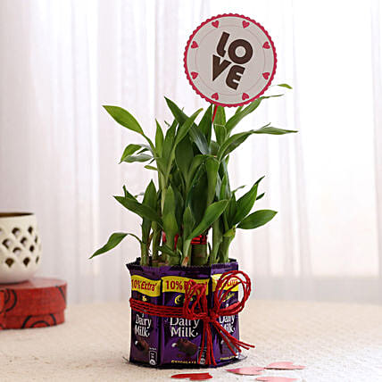 Bamboo with Love Tag & Dairy Milk Combo: Valentine Plants