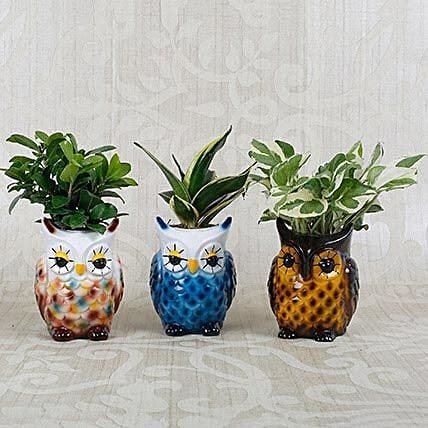 Beautiful Owl Shaped Decorative Pots with Plants: Feng Shui Gifts
