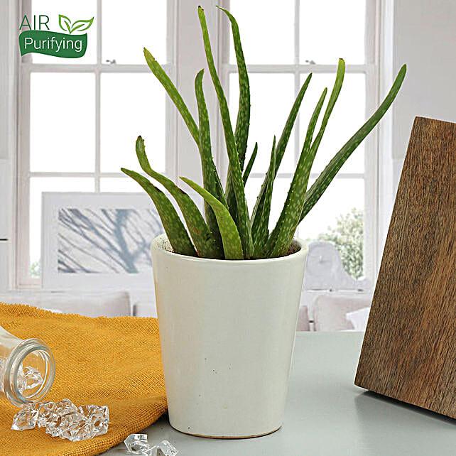 Beauty Of Aloe Vera Plant: Tropical Plants