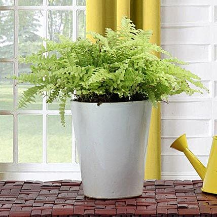 Beauty With Fern FNP: Exotic Plant Gifts