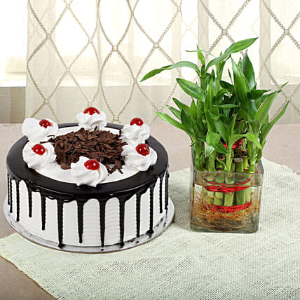 Blackforest Cake N Two Layer Bamboo Plant: Cakes N plants