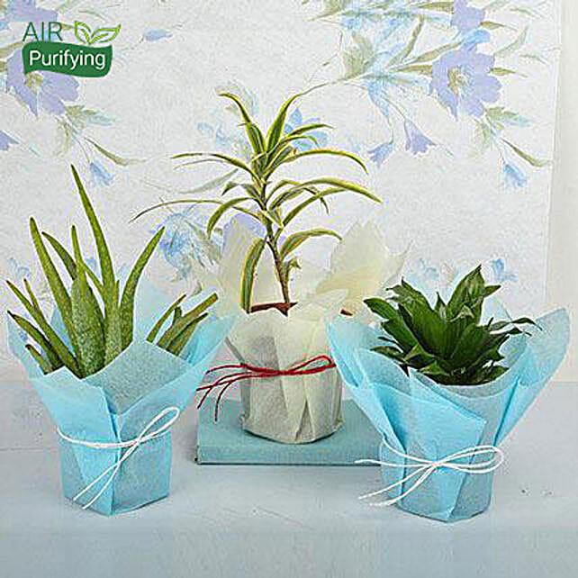 Bring Joy to Life Plants: Air Purifying Plants