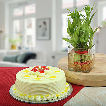 Butterscotch Cake With Bamboo Plant: Cake Combos
