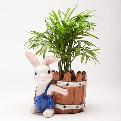 Chamaedorea Plant in Resin Rabbit Pot: Pots and Planters