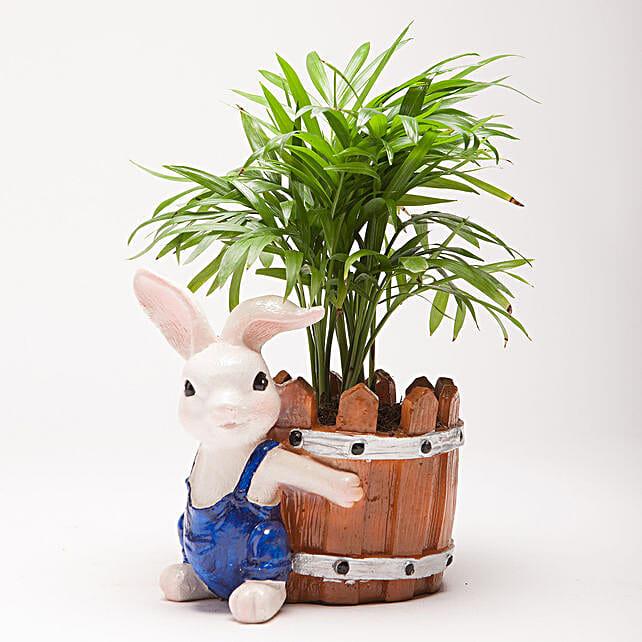 Chamaedorea Plant in Resin Rabbit Pot