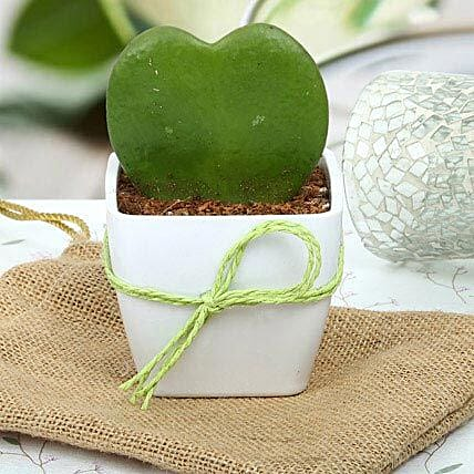 Cute Love Plant: Send Gifts for Dussehra