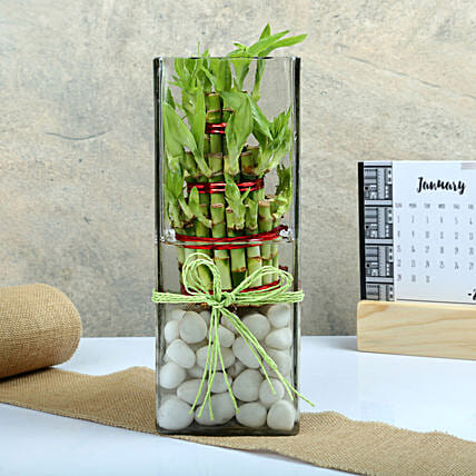 Exquisite Three Layer Bamboo Terrarium: Exotic Plant Gifts