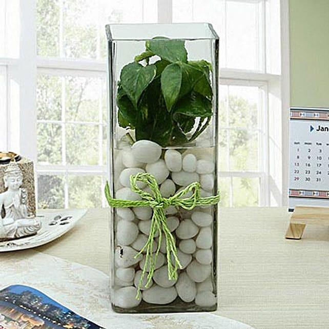 Fashionable Money Plant Terrarium: