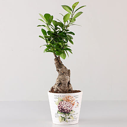 Ficus Bonsai In Lavender Découpage Planter: Gifts to India