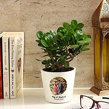 Ficus Dwarf Plant in White Personalised Ceramic Pot: