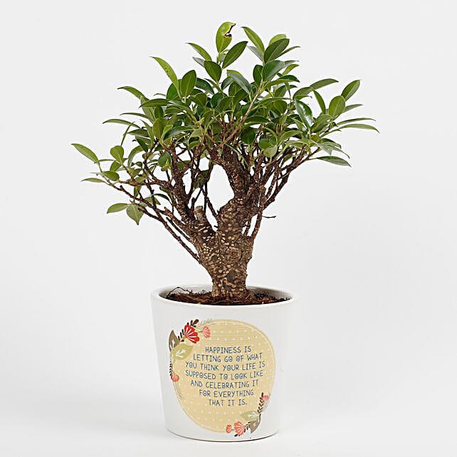 Ficus I Shape Bonsai Plant in Printed Ceramic Pot: Premium Gifts