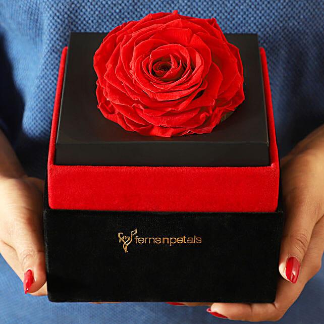Big Forever Red Rose in Black Velvet Box: Roses