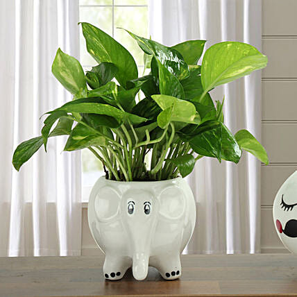 Freshen Up Money Plant: Gifts for Pongal