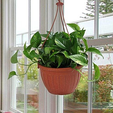 Go Green With Money Plant: Feng Shui Gifts