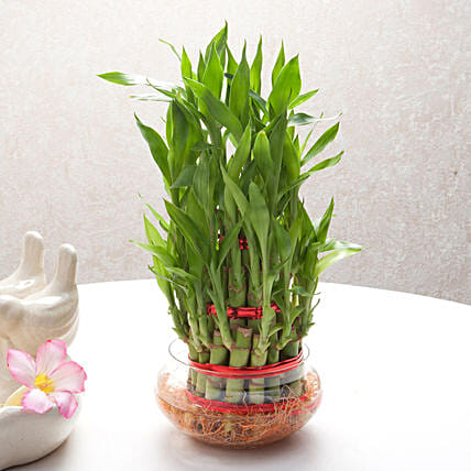 Good Luck Three Layer Bamboo Plant: Home Decor