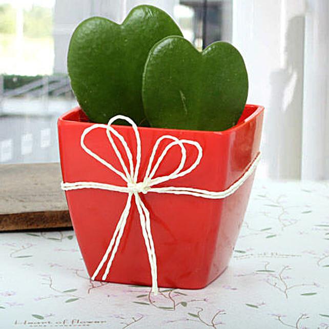 Gorgeous Love Plant: Buy Indoor Plants