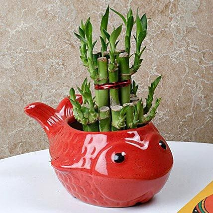 Gorgeous Lucky Bamboo Plant: Send Spiritual Gifts