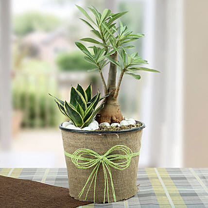 Green Home Decor Dish Garden: Tropical Plant Gifts
