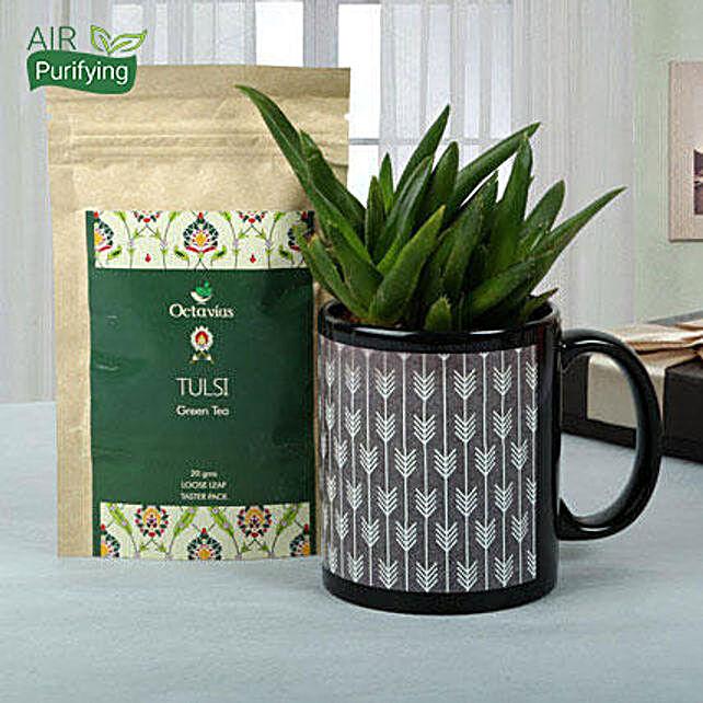 Green Plant Hamper: Plant Combos