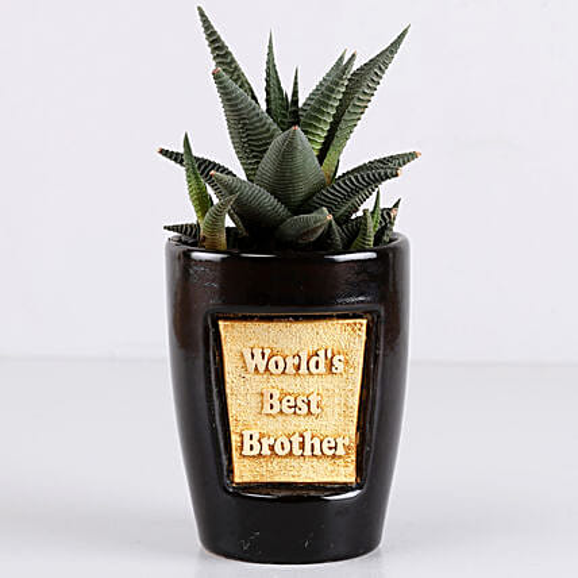 Haworthia Plant For Best Brother: Ornamental Plants