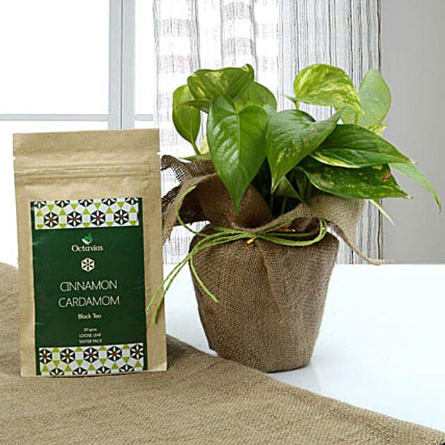 Health n Money Combo: Foliage Plants