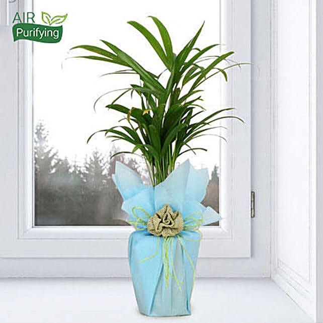 Impressive Areca Palm: Tropical Plant Gifts
