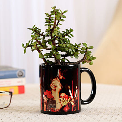 Jade Plant In Black Personalised Mug: Personalised Pot plants