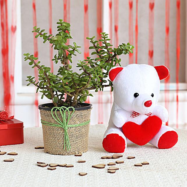 Jade Plant & Teddy Bear Combo: Valentine Plants