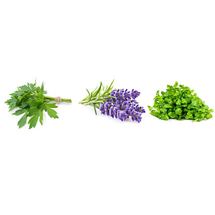 Lovage Lavender & Cress Seeds Combo: Herbs Seeds