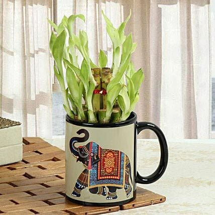 Luck In Mug: Exotic Plant Gifts