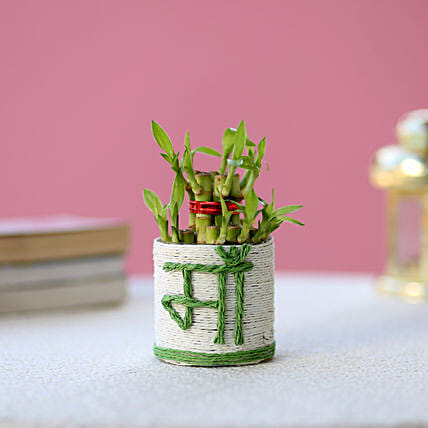 Lucky Bamboo Plant to Mom: Exotic Plant Gifts