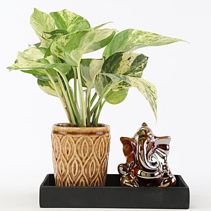 Marble Money Queen Plant In Ceramic Platter: Eid Gifts