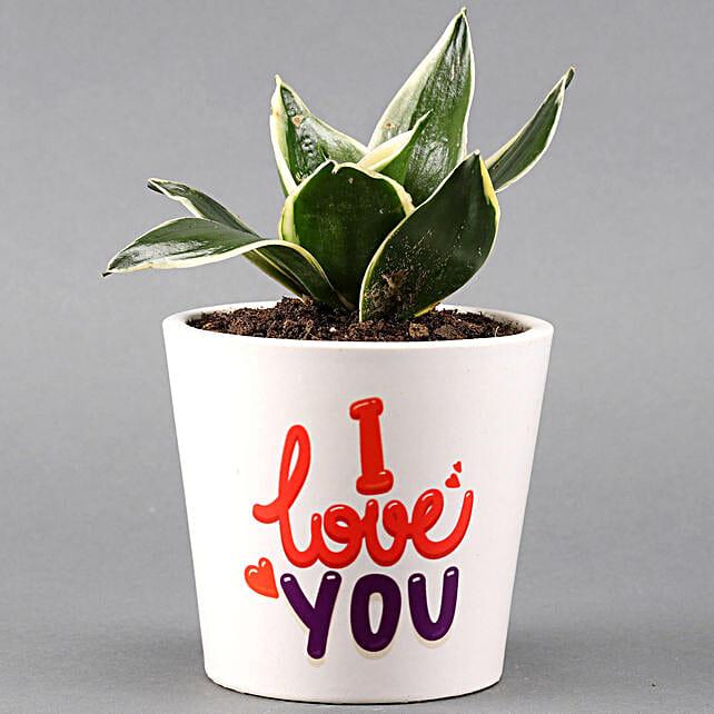 MILT Sansevieria In I LOVE YOU Pot: Succulents and Cactus Plants