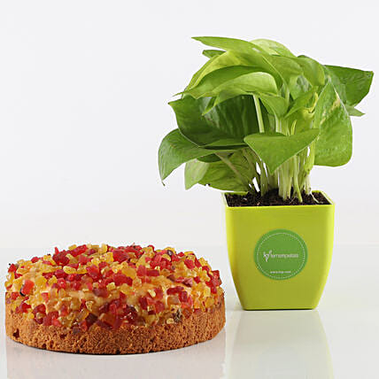 Mixed Fruit Dry Cake & Money Plant Combo: Gift Combos