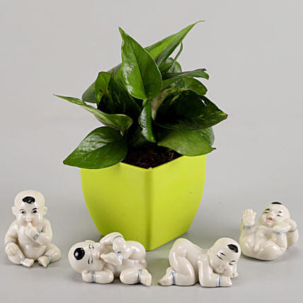 Money Plant in Green Pot & Baby Buddha Combo: Plant Combos