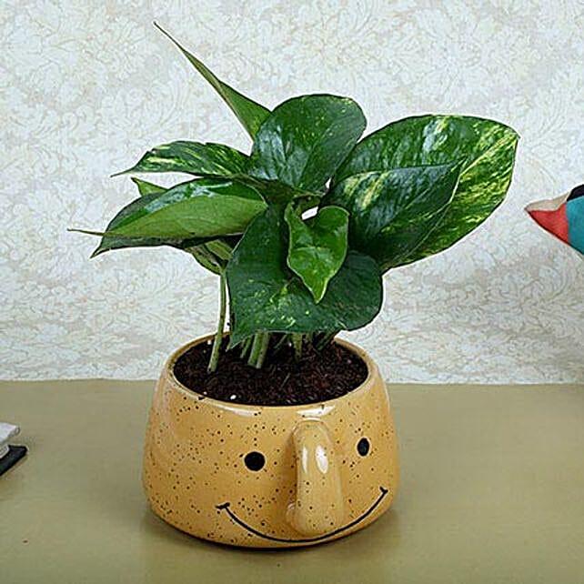 Money Plant In Smiley Vase: Office Desk Plants