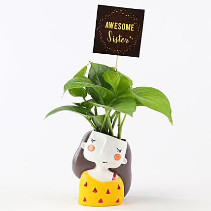 Money Plant In Yellow Pot For Sister: Money Tree