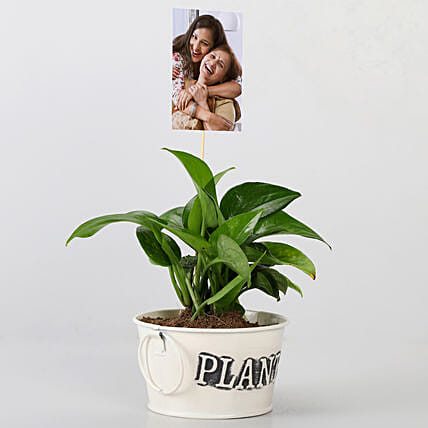 Money Plant With Your Personalised Picture: Plants N Personalised Gifts