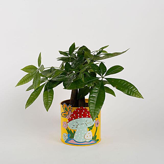 Pachira 3 in 1 Bonsai Plant in Yellow Mushroom Metal Planter: Flowering Plants