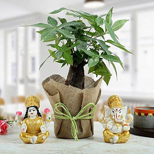 Pachira Bonsai Combo: Laxmi Ganesha Idol Gifts