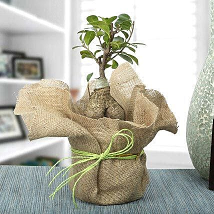 Picturesque Ficus Ginseng Bonsai Plant: Gift for Girlfriend Day