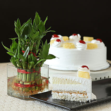 Pineapple Cake With Lucky Bamboo Plant: Bamboo Plants